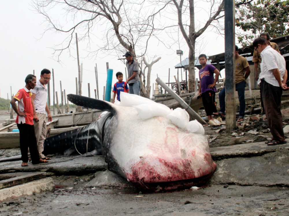 Curious onlookers view the carcass of the whale shark at the Parit Jawa Fishermen's Jetty in Johor August 17, 2019. — Bernama pic