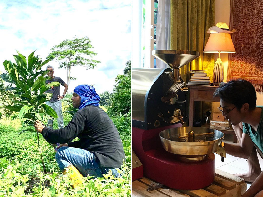 Trimming a one-year-old Liberica plant (left). Adam experimenting with a 1kg coffee roaster (right). — Picture courtesy of House of Kendal