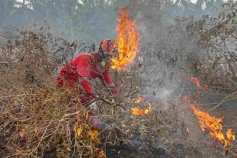 Fire fighters try to put out a fire at a peatland in Kampar, Riau province, Indonesia September 24, 2019. — Antara Foto/Rony Muharrman via Reuters