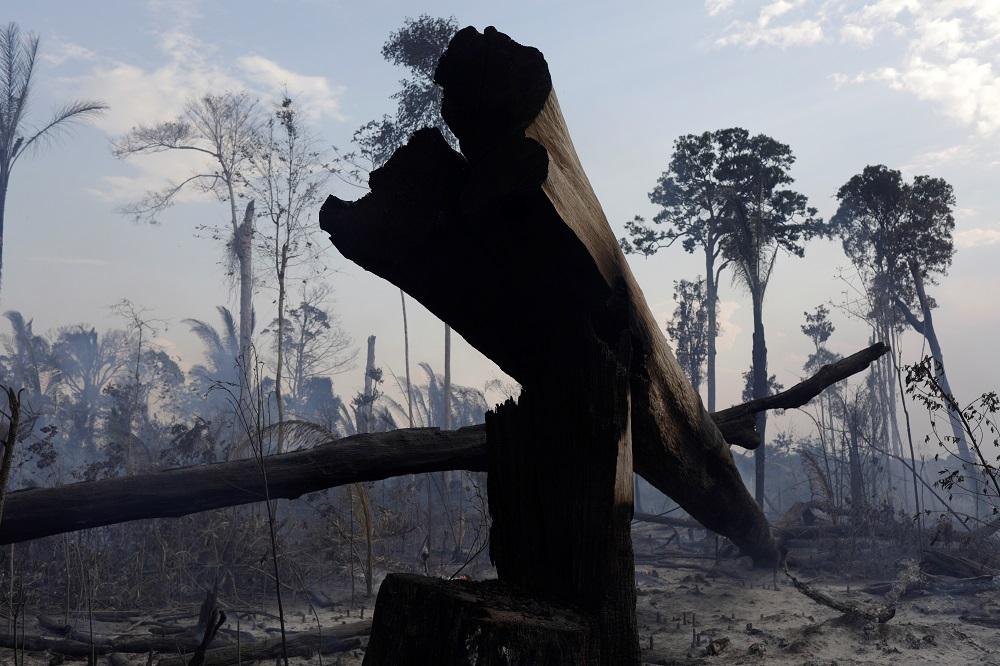 A burning tract of the Amazon forest as it is cleared by farmers, in Rio Pardo, Rondonia, Brazil September 16, 2019. — Reuters pic