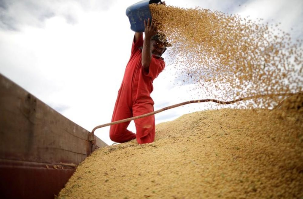 As China accounts for 60 per cent of global soybean imports, its diminished appetite — just as US farmers pull in what is projected to be their third-largest harvest ever — stands to add further volatility to the critical crop, which rallied to nine-year highs this year. — Reuters pic