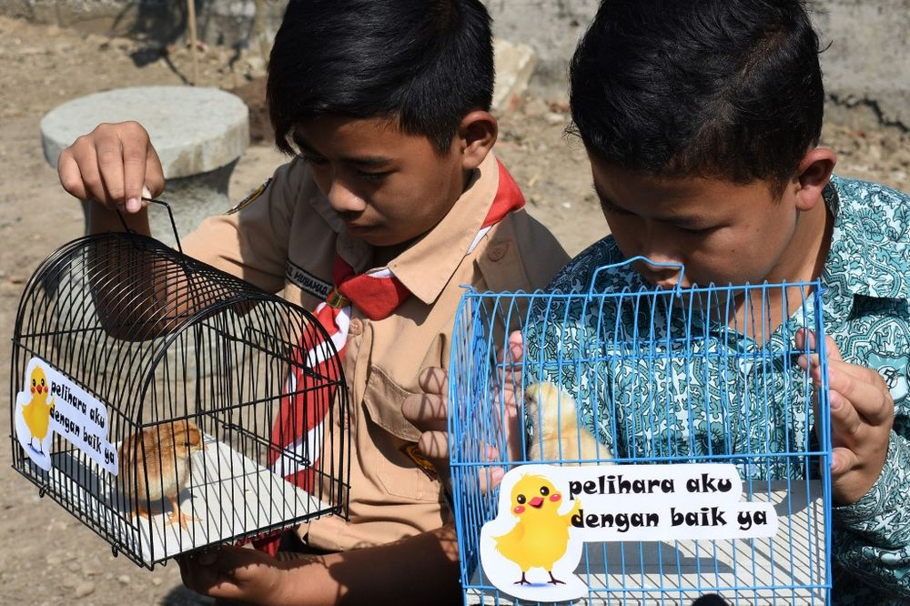 Indonesian pupils look at chicks in cages with signs that read 'please take good care of me', given to them by local officials as part of a programme to wean schoolchildren off smartphones, in Bandung, West Java, on November 21, 2019. — AFP pic