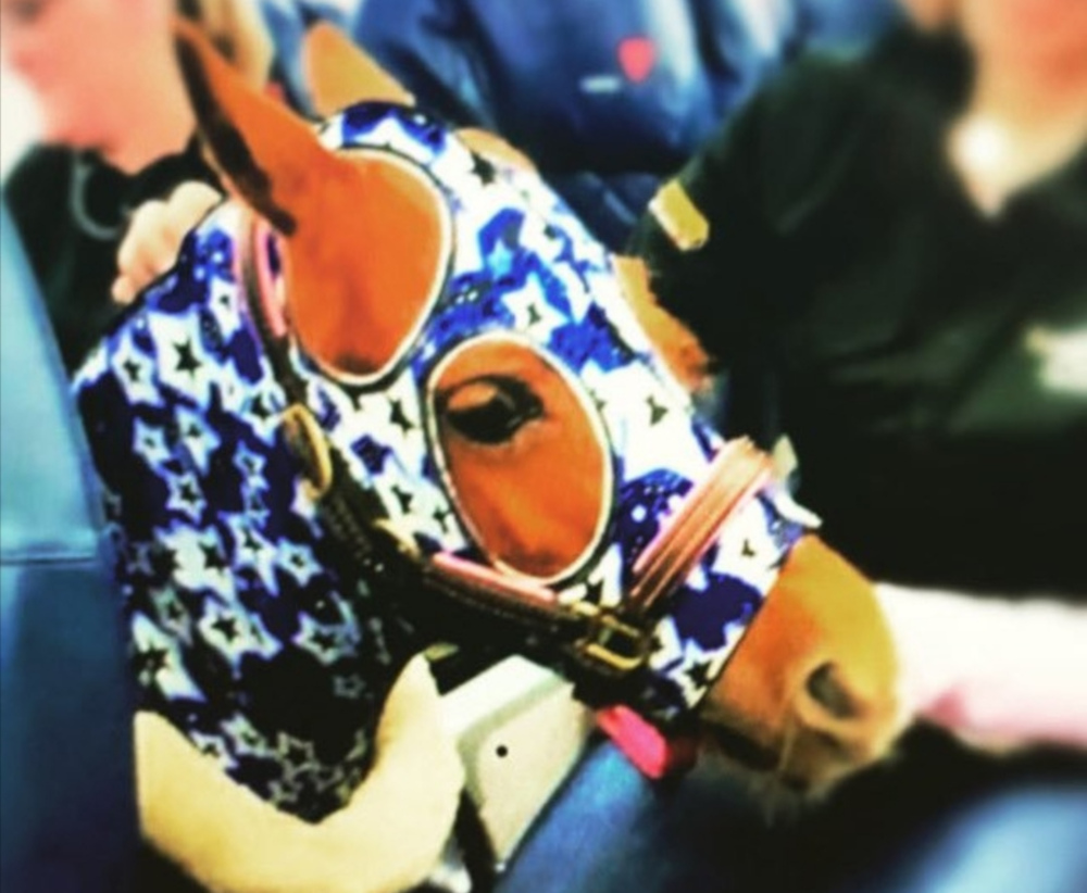 Adorned with a blue-starred head cover, there will be 'neigh' problems on this flight with a minature horse onboard. — Picture from Twitter/passengershame