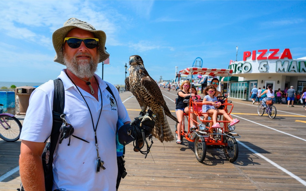 PJ Simonis keeps an eye on the boardwalk, while accompanied by his falcon Blackberry, in Ocean City, New Jersey August 20, 2019. — AFP pic