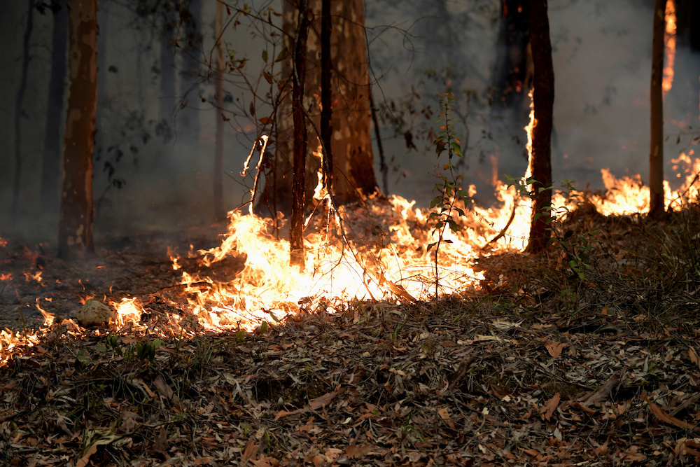 Small fires along the eastern edge of the Currowan fire still burn on the Princes Highway near in Milton, Australia January 5, 2020. — Reuters pic