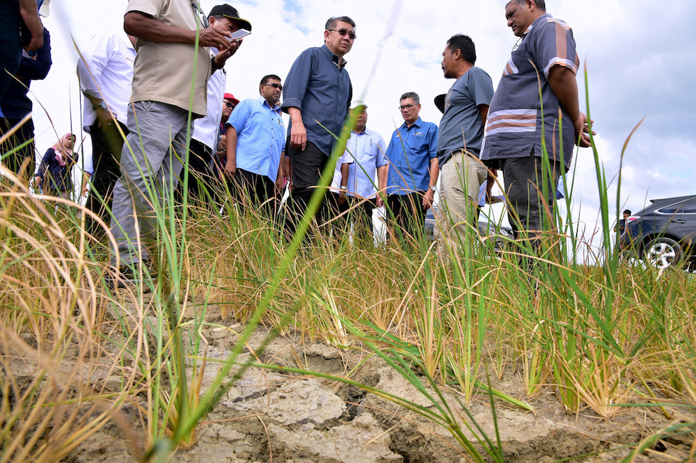 Agriculture and Agro-based Industry Minister Datuk Seri Salahuddin Ayub visits a drought-stricken paddy field in Sempering near Kangar January 2, 2020. — Bernama pic
