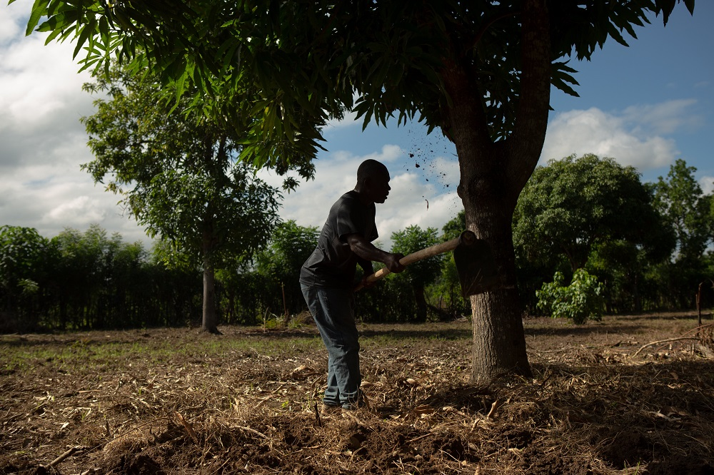 Farmer Remy Augustin, 54, prepares the ground to plant maize on a plot owned by his niece near Caracol, Haiti December 10, 2019. — Allison Shelley via Reuters