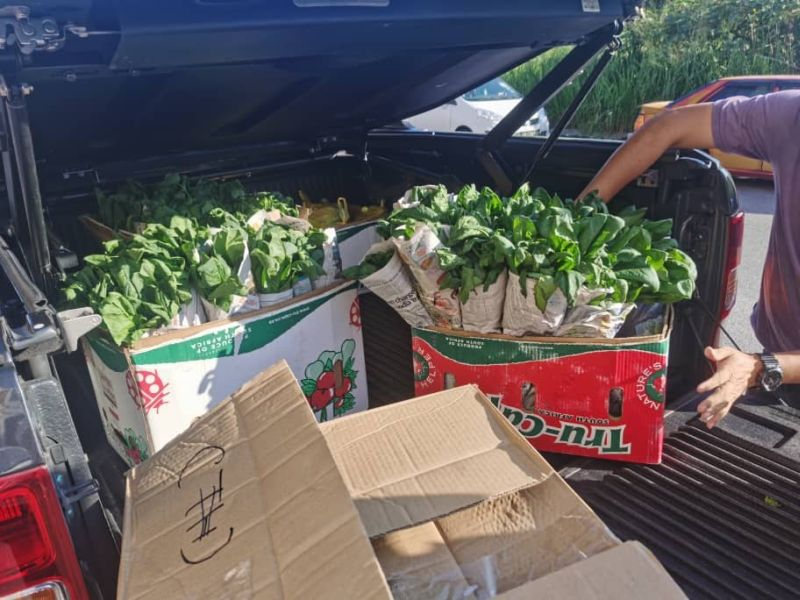 Tonnes of freshly-harvested vegetables were being discarded by growers at Cameron Highlands as they could not be transported to other locations due to the MCO. — Picture courtesy of Jason Kong