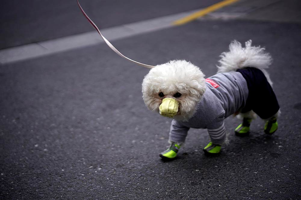 A dog wearing face mask is seen on a street as the country is hit by an outbreak of covid in Shanghai, China March 2, 2020. — Reuters pic