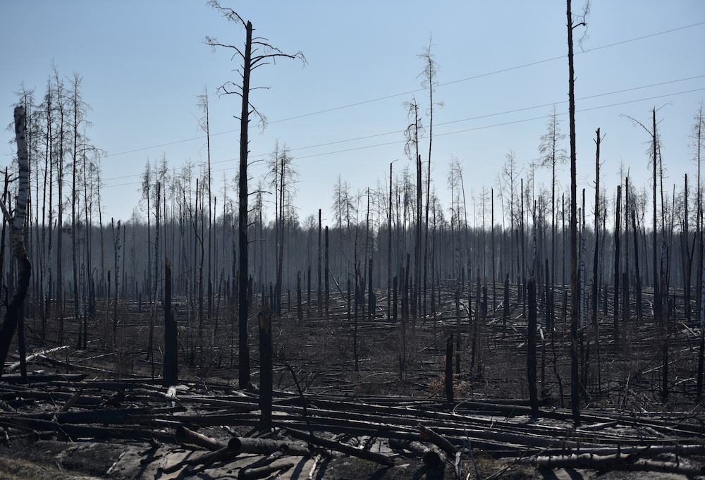 Burned trees are seen after a forest fire outside the settlement of Poliske located in the 30 km exclusion zone around the Chernobyl nuclear power plant, Ukraine April 12, 2020. — Reuters pic