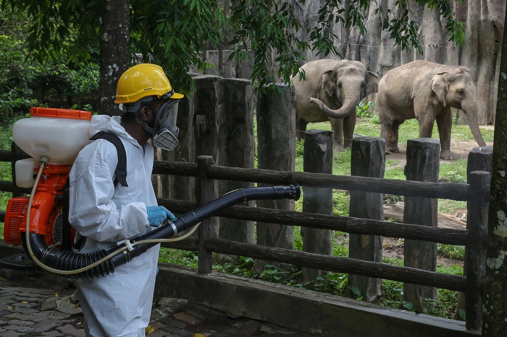 File picture shows a worker spraying disinfectant outside the elephant enclosure at Zoo Negara during the movement control order in Kuala Lumpur April 17, 2020. — Picture by Yusof Mat Isa