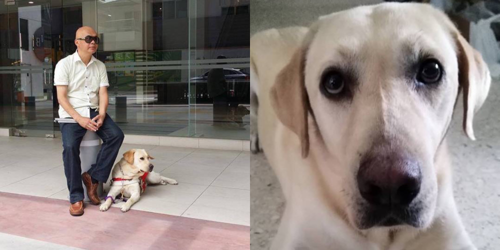 LaShawn was recognised as the first guide dog for the blind in the Malaysia Book of Records in 2018. — Picture from Facebook/DogsForSight