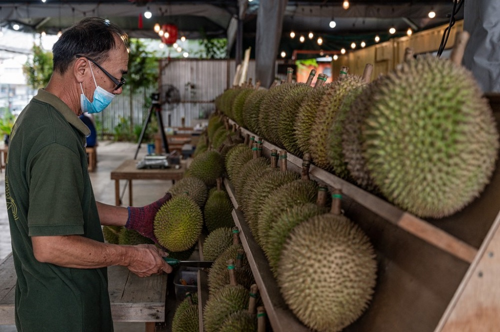 This picture taken on July 8, 2020 shows a worker inspecting the durians at a stall in Kuala Lumpur. ― AFP pic
