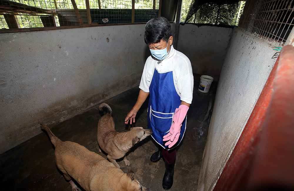 With age catching up, animal rescuer Tan Juat Jong is reaching out to good Samaritans to help adopt dogs at her shelter. — Picture by Farhan Najib