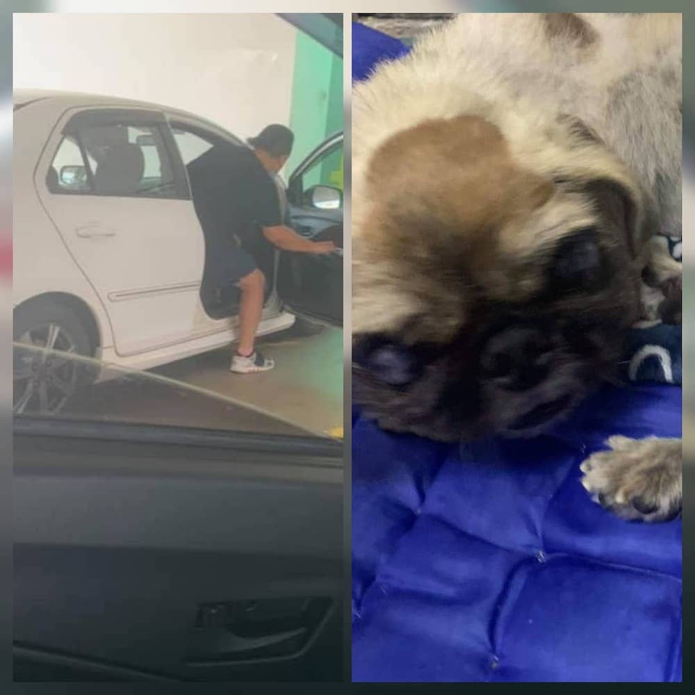 Animal rescuer Mandy Yeap was surprised she was given RM50 by a man of different race on Monday. The man said it was to help the dog.— Picture via Facebook