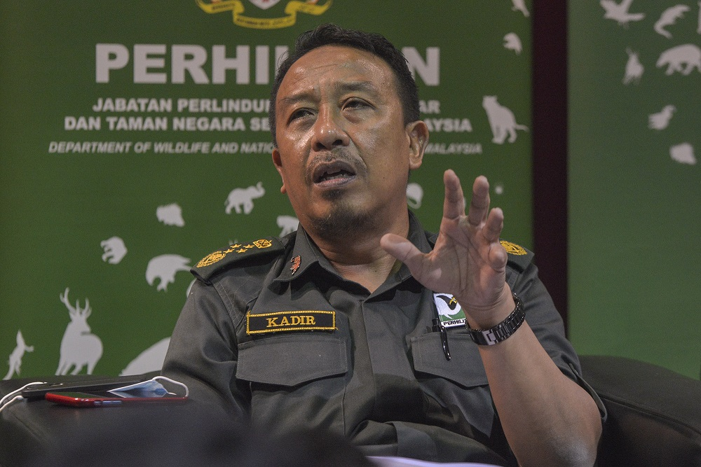 Perhilitan director-general Datuk Abdul Kadir Abu Hashim speaks to reporters during the Op Bersepadu Khazanah press conference in Selangor August 19, 2020. ― Picture by Shafwan Zaidon