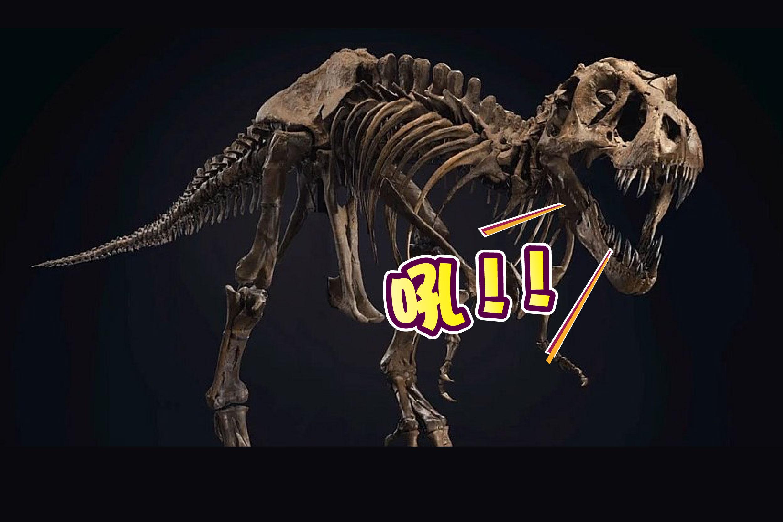 """名为""""史丹""""的暴龙化石,预计拍卖价会刷新交易记录。-法新社/精彩大马制图-"""