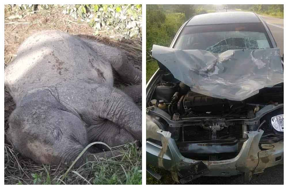 The dead baby elephant by the side of the road was spotted by many passersby along Jalan Mawai in Johor. — Pictures via Facebook/OrangKota-Tinggi