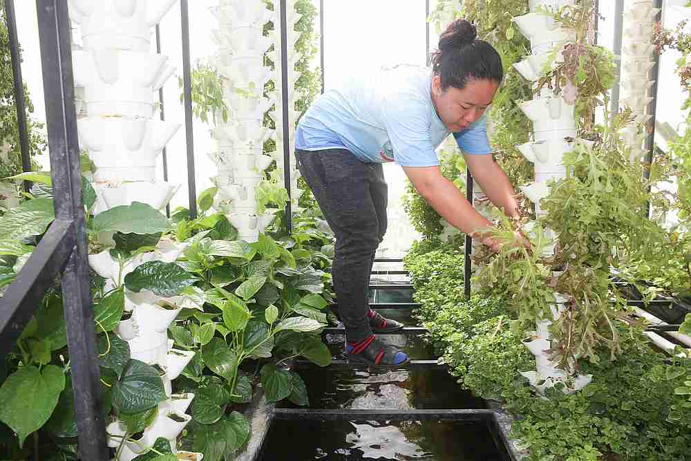 Tang's smart farms employ both soil and soilless farming techniques. Using aquaponics as well to farm organically grown fish. — Picture by Choo Choy May