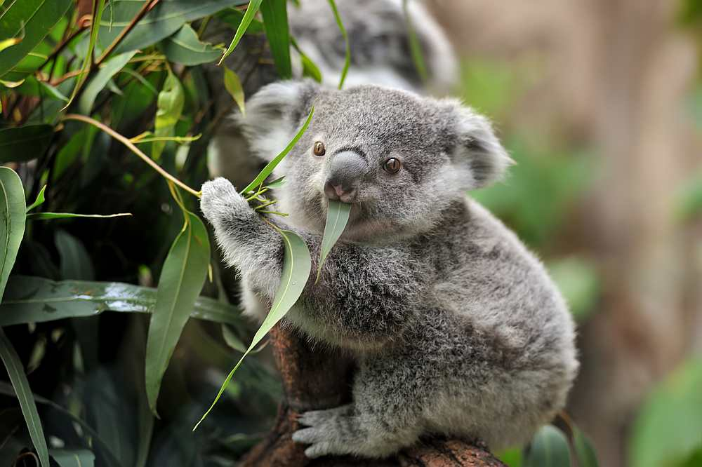 Watching videos of cute animals can help reduce stress levels by as much as 50 per cent. — istock.com/freder pic via AFP