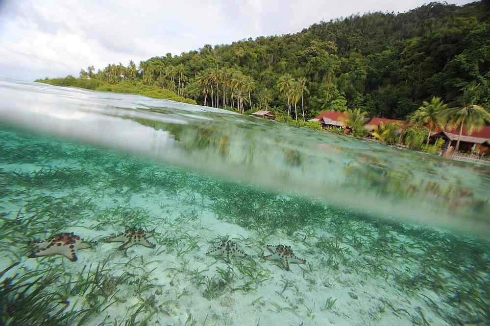 Ahead of UN Summit: Nations commit to reverse nature loss by 2030