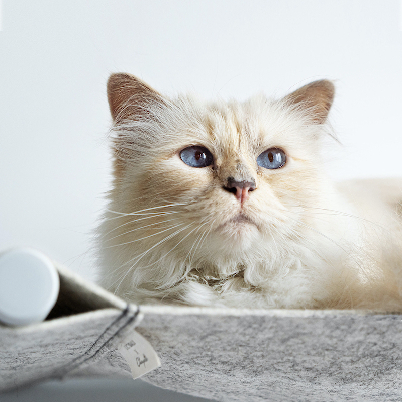 Choupette has partnered with Munich brand LucyBalu on a cat hammock called 'SWING.' — Picture courtesy of LucyBalu and Choupette