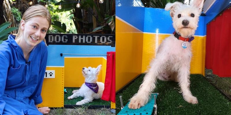 The creative invention lets Giertz's dog practise her selfie skills. — Screengrab from YouTube/Simone Giertz