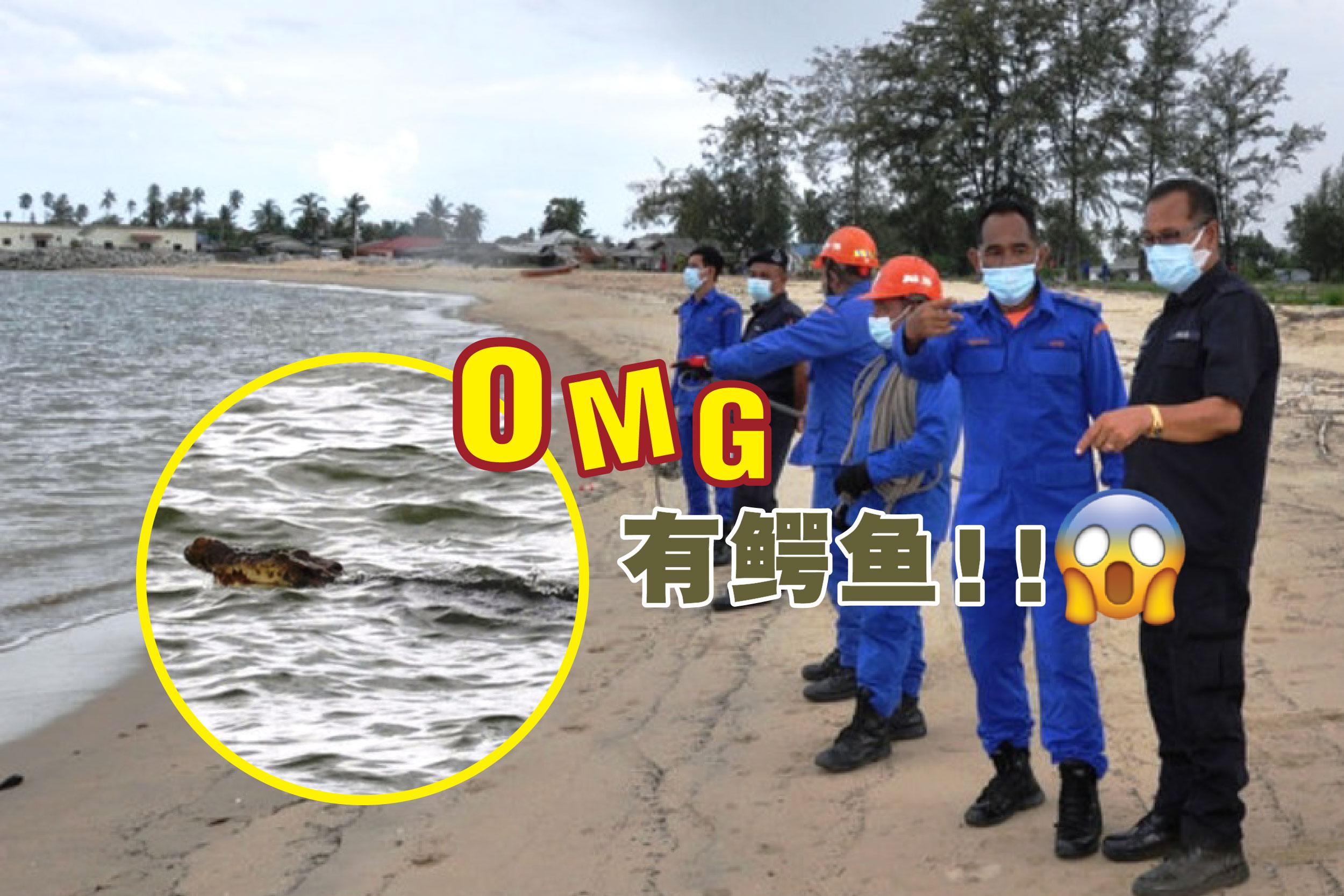 登嘉楼瓜拉勿述沙滩惊现鳄鱼踪影,惊呆了住在附近的村民。-马新社/精彩大马制图-