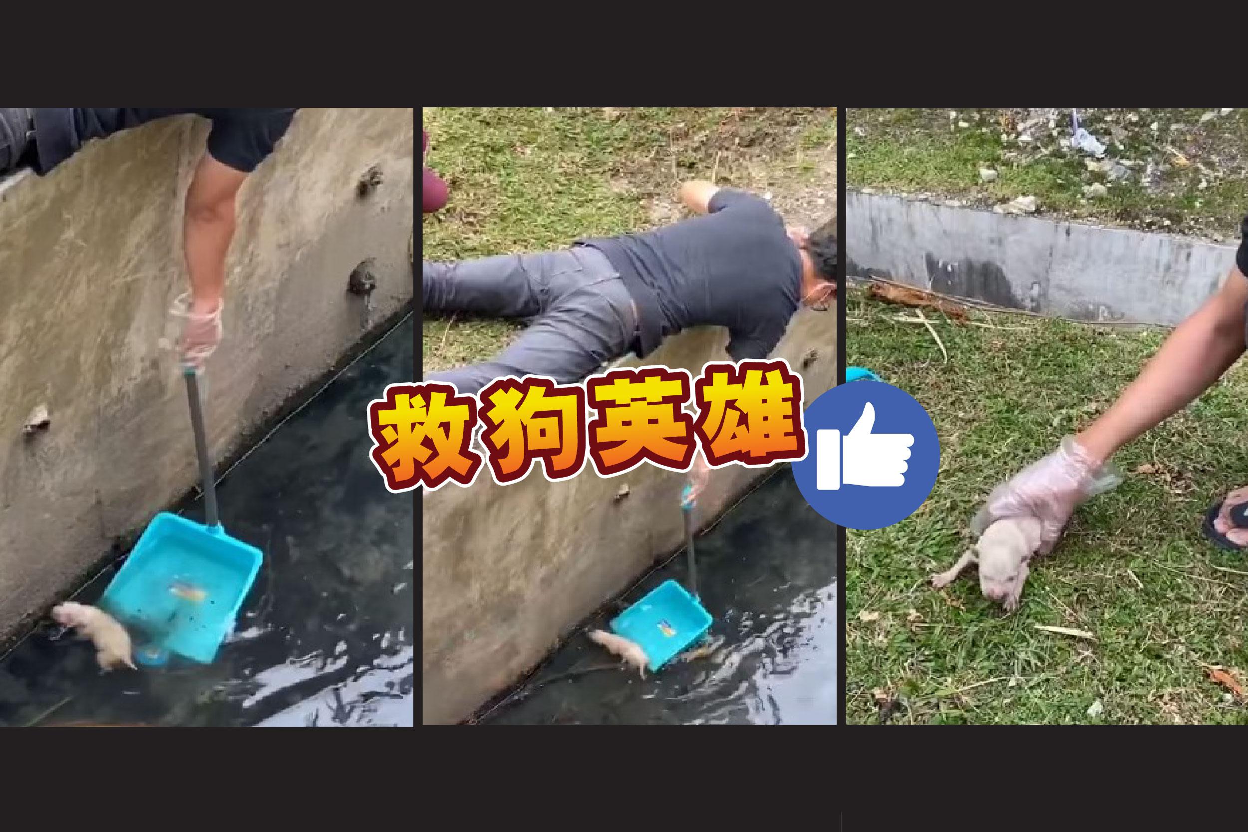 最近一名来自八打灵的马来男子,竭尽全力救出小狗的视频,获得不少网民赞扬。-视频截图,精彩大马制图-