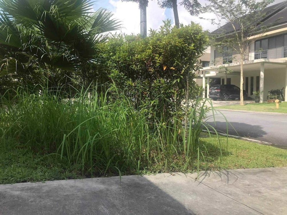 The overgrown grass at Leisure Farm, a gated development situation in Iskandar Malaysia, as Singaporeans leave behind their homes due to Malaysia's movement control order. — Picture courtesy of Mr Leung