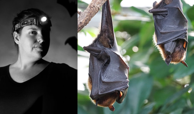 Phelps said that bats have turned into an easy scapegoat in the Covid-19 pandemic. — Pictures courtesy of EcoHealth Alliance and Reuters