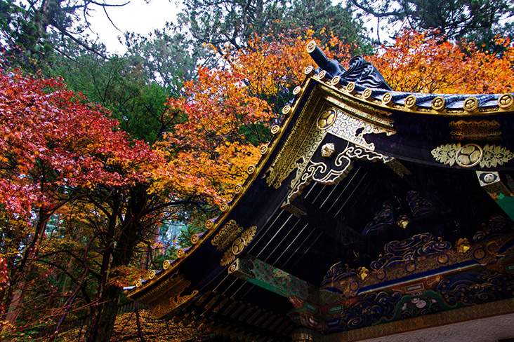 Fall foliage burst in a riot of red, orange and gold above a Japanese temple — Pictures by CK Lim
