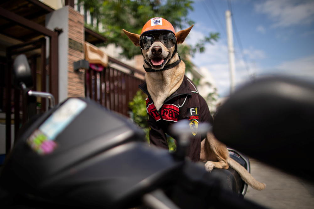 Bogie, the pet dog of motorcycle enthusiast Gilbert Delos Reyes, wearing shades and a helmet sits on his owner's motorcycle, in Imus, Cavite, Philippines, November 26, 2020. — Reuters pic