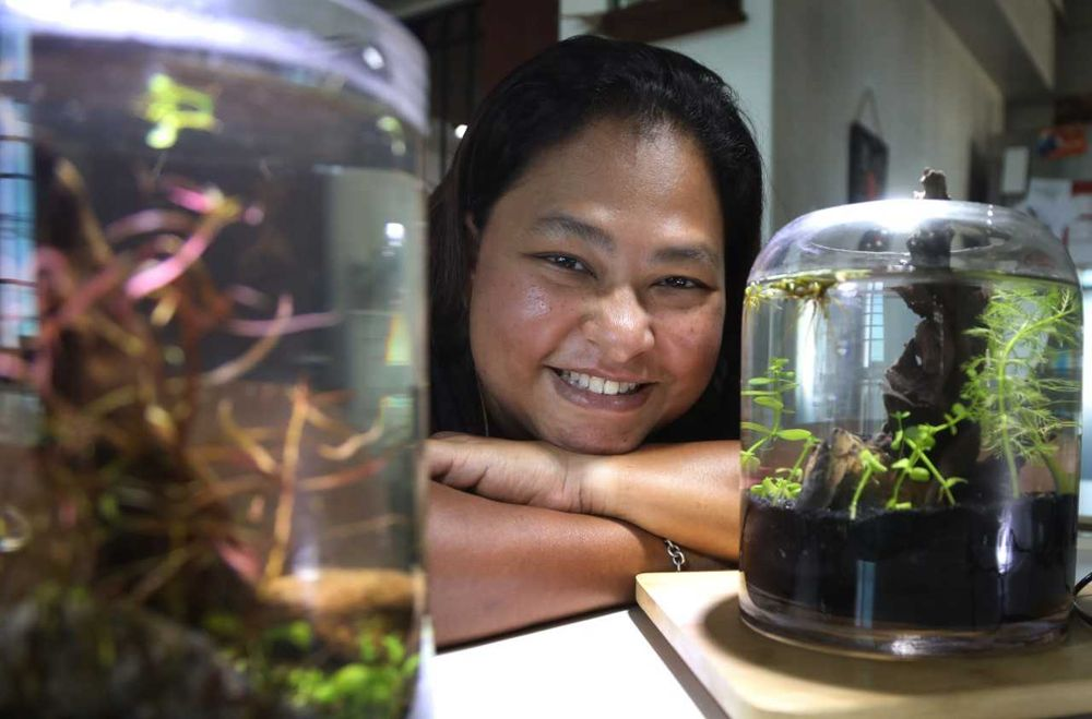 Hobbyist Kelly Pereira says that watching planted tanks help her deal with anxiety. — TODAY pic
