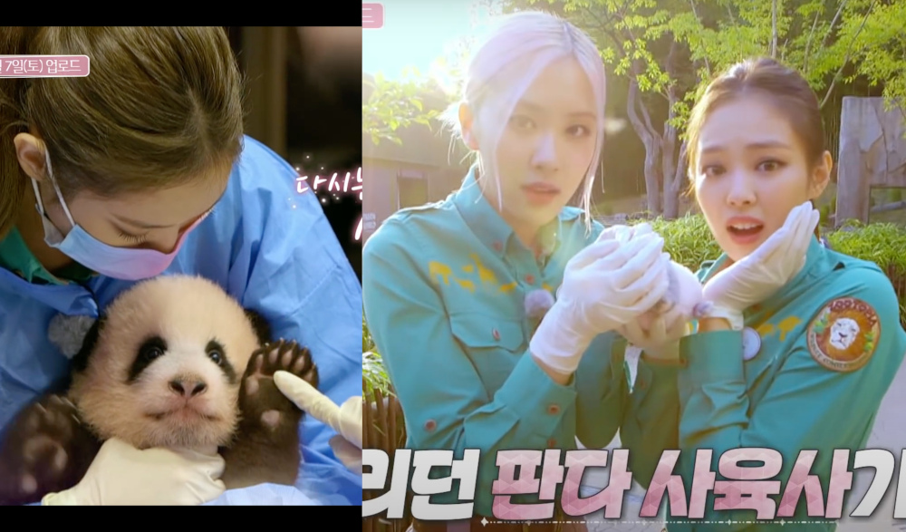 Blackpink's teaser clip has stoked controversy in China for its scenes of the members coming into physical contact with pandas. — Screengrabs from YouTube/Blackpink