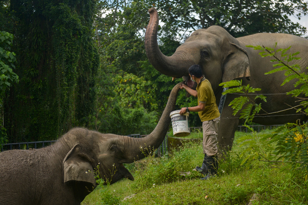 The reopening will provide a vital lifeline for Zoo Negara that has been struggling for funds for most of 2020 as a result of the Covid-19 pandemic. — Picture by Miera Zulyana