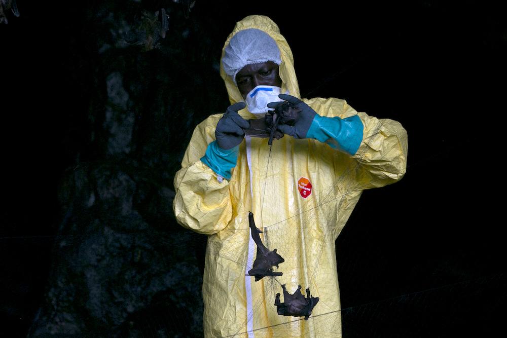 """世卫认为,新型冠状病毒""""有可能或十分有可能""""是由蝙蝠透过另一种动物,再传染到人类。-法新社-"""