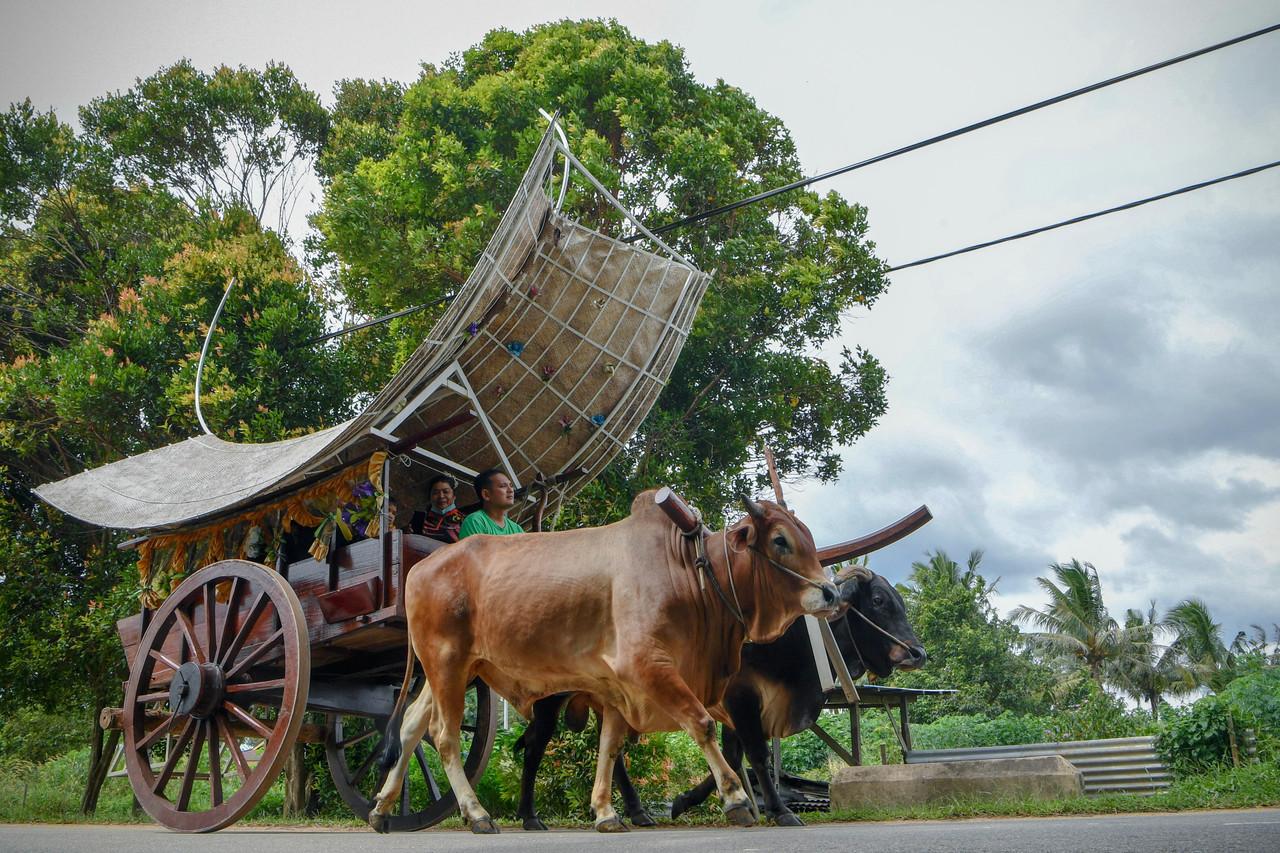 Bullock carts are fast becoming extinct due to rapid development. — Bernama pic