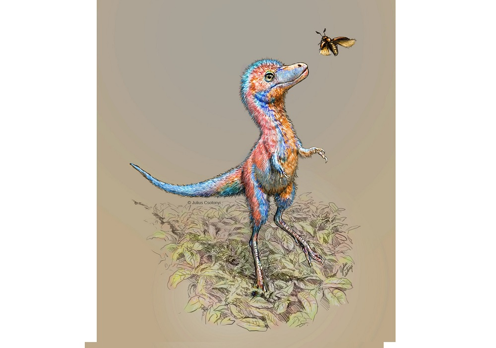 A baby tyrannosaur from the Cretaceous Period of North America, based on partial fossils unearthed in Montana and in the Canadian province of Alberta, is seen in an undated artist's rendition. — Handout by Julius Csotonyi via Reuters