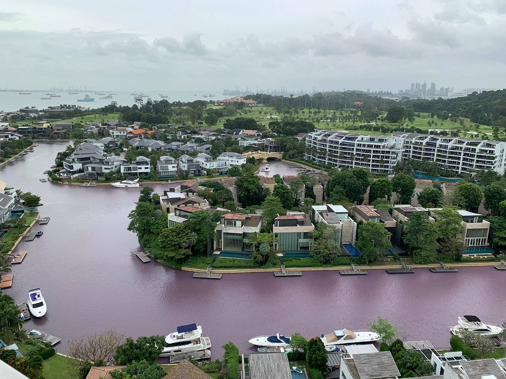 The 'pink' waterways along the residential enclave of Sentosa Cove. — Picture by The Heron of the Green Barrels via TODAY