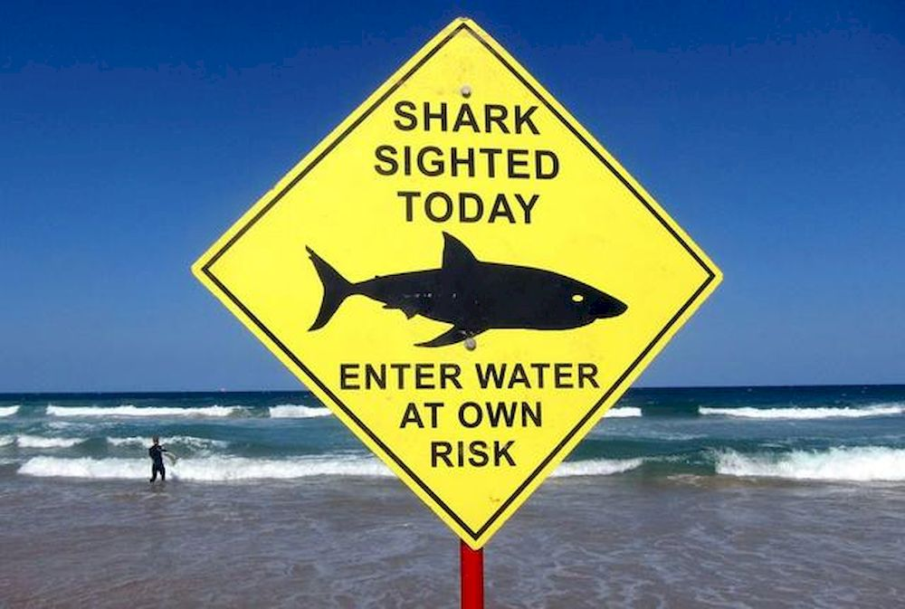A surfer carries his board into the water next to a sign declaring a shark sighting on Sydney's Manly Beach, Australia, in this file photo taken November 24, 2015. — Reuters pic