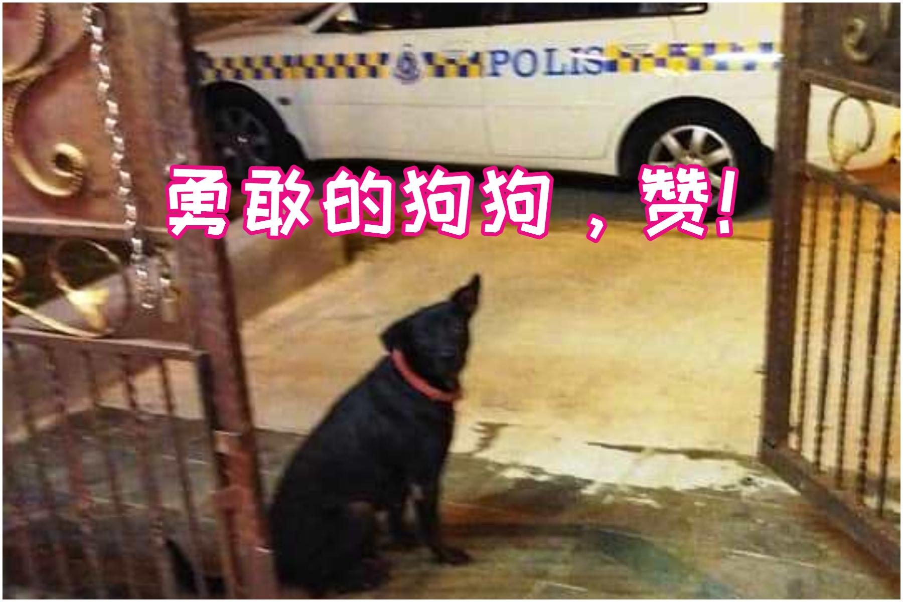 """这只被原主人遗弃后,被现在脸书用户O Tak Tan收养的狗狗,因看到邻居进贼狂吠帮忙吓走歹徒,成为""""英雄""""。-摘自O Tak Tan脸书/精彩大马制图-"""