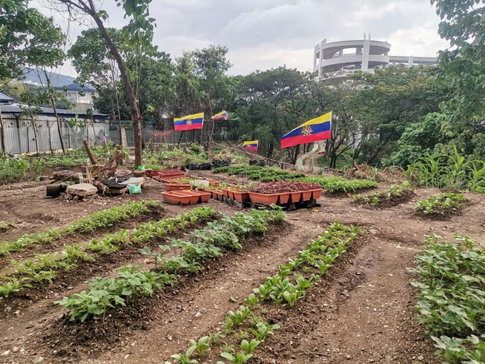 The Kuala Lumpur City Hall (DBKL) along with residents from several People's Housing Project (PPR) in Kuala Lumpur have turned a deserted reserve land into a vegetable garden. — Picture from Facebook/Dewan Bandaraya Kuala Lumpur