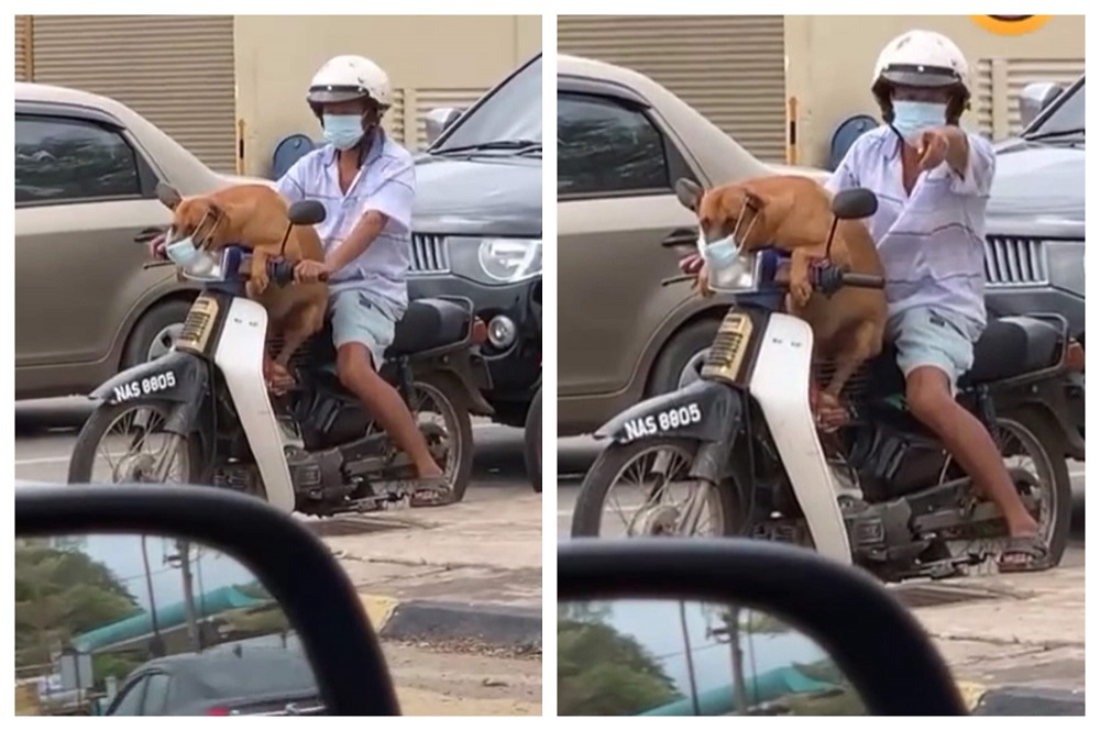 The owner was praised for making sure his adorable brown dog was safe during the pandemic. ― Screengrab from TikTok/@shafiq_joker
