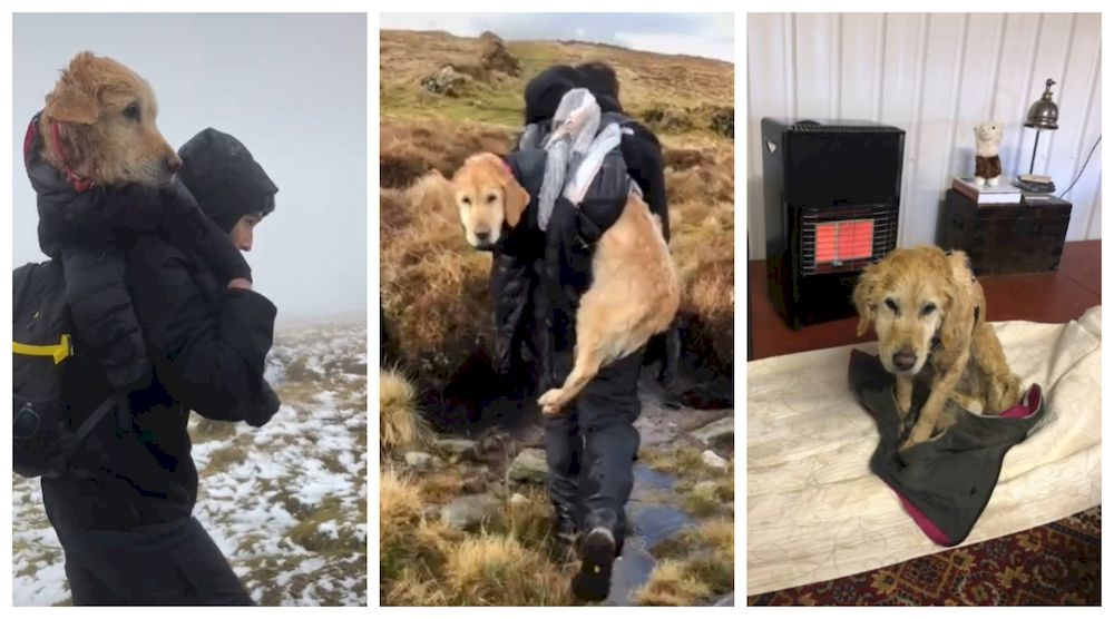 The couple, both doctors, wrapped the cold golden retriever up and carried her downhill before she was reunited with her owners. — Screengrab from TikTok/jeanfrancoiswillem