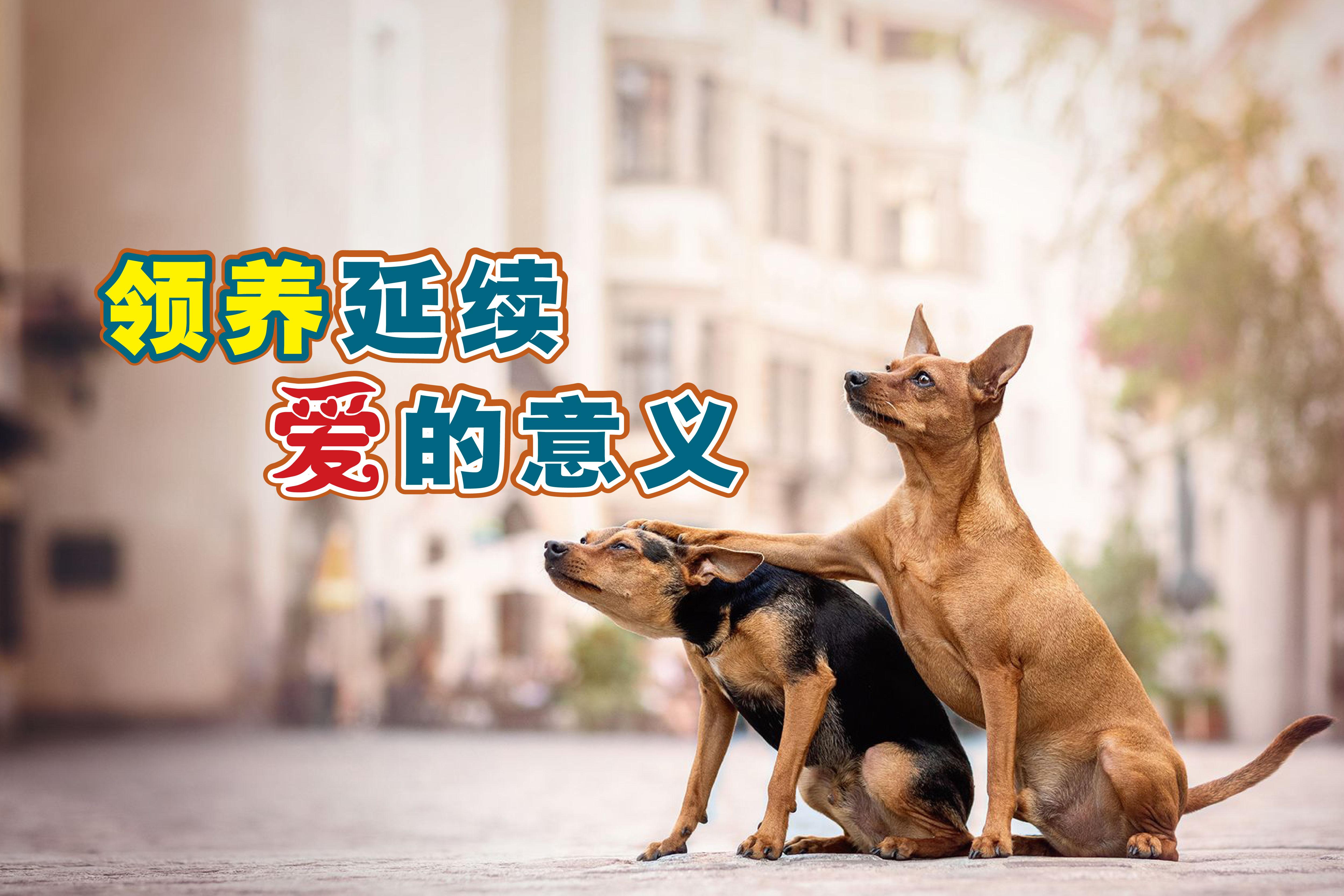 猫狗的生命有两次,第一次是出生,另一次则是遇见他们的主人。-图取自网络,精彩大马制图-
