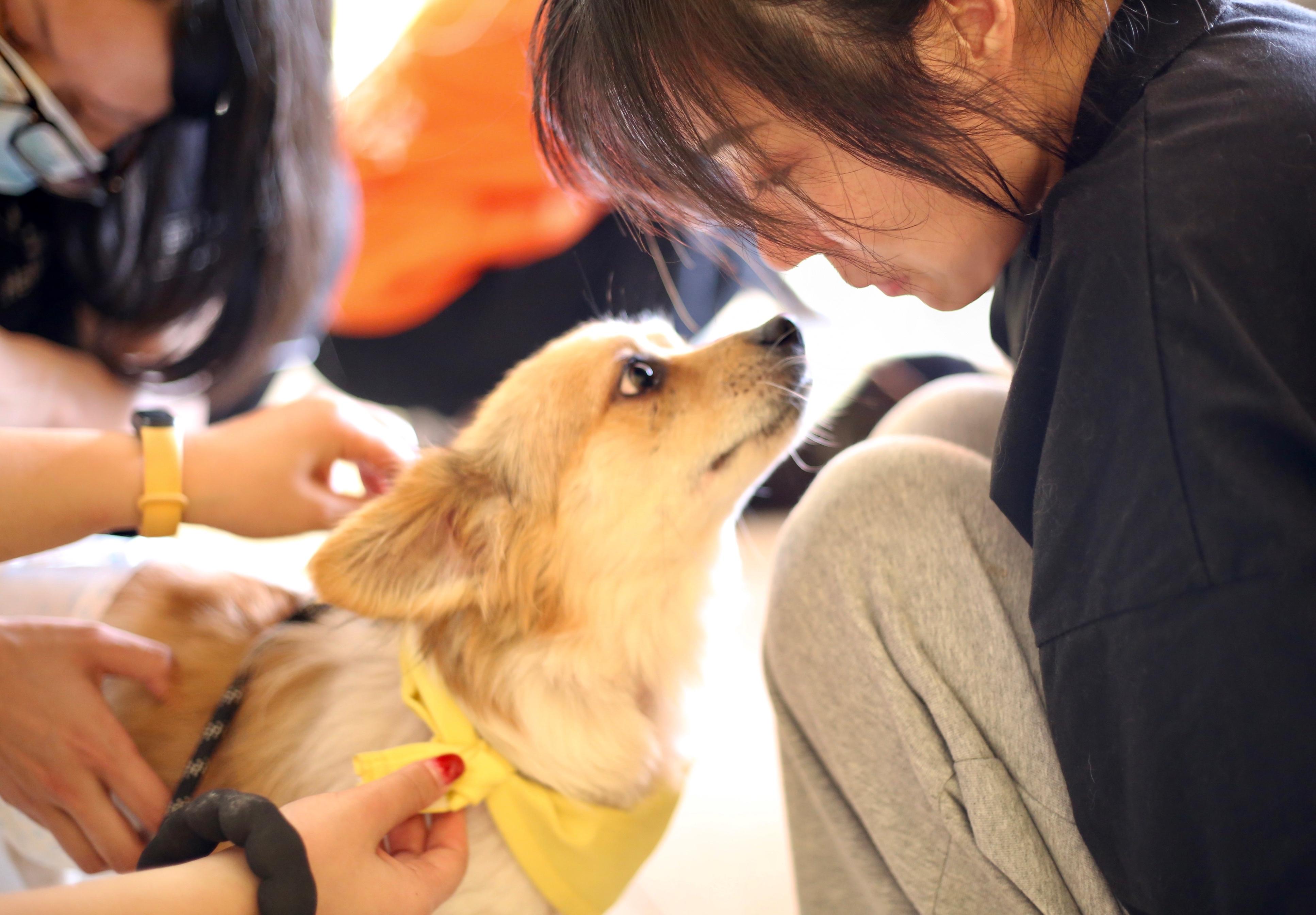 多数的收容所都会帮忙处理领养程序,若有兴趣领养的民众,也可寻找理念相同、有适合自己饲养的猫狗、或价钱适宜的收容所询问详情。-图取自网络-
