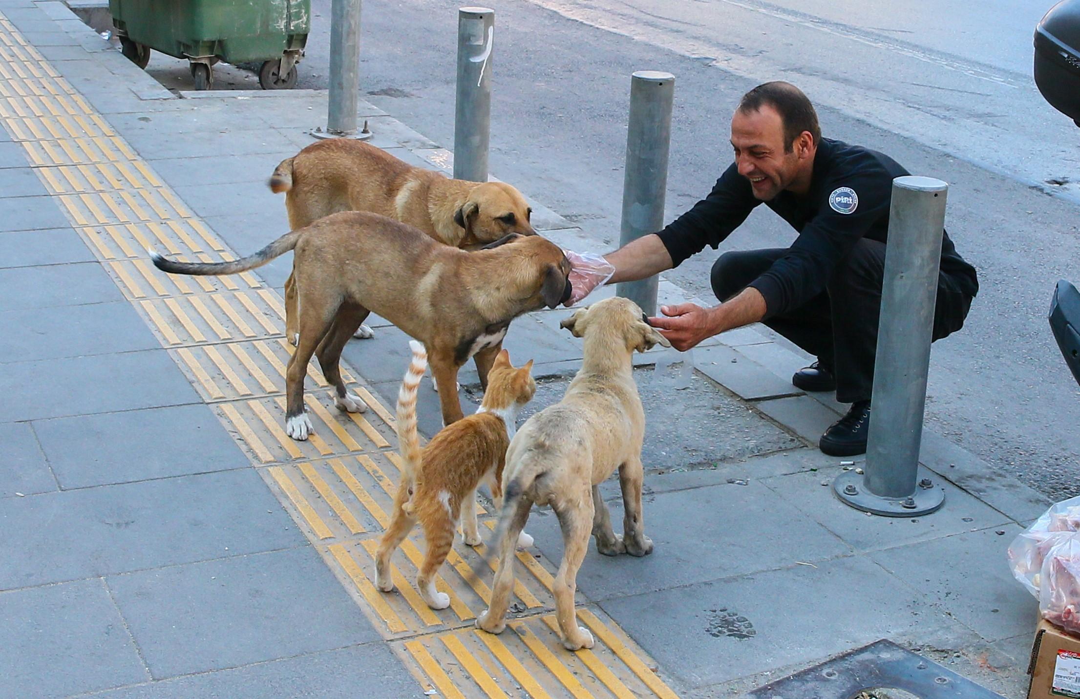 流浪猫狗指的是生活在城市街道或户外的无主猫狗,主要依靠城市资源(厨余垃圾、老鼠或人为投喂)生存,与人类息息相关。-图摘自网络-