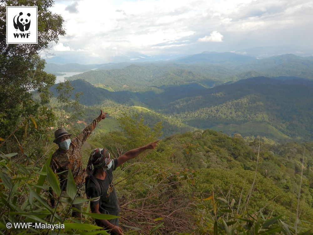 WWF-Malaysia's patrol teams cover more than 11,000 km of jungle annually. — Christopher Wong /WWF-Malaysia pic