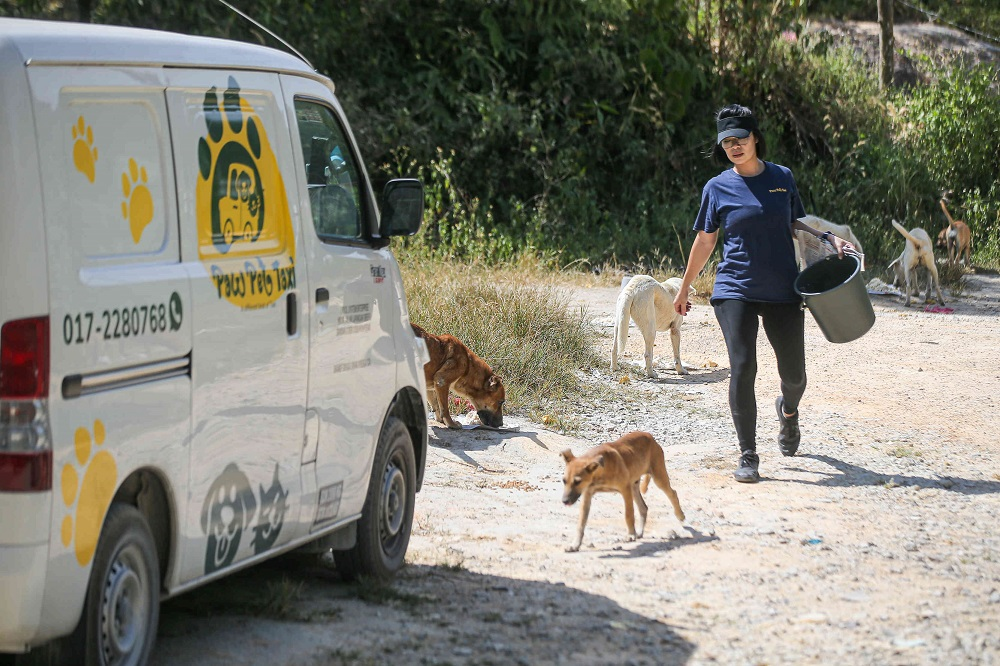 Pet taxi operator Juvena Chan said she started feeding stray dogs after she was asked by a friend to help out. ― Picture by Farhan Najib